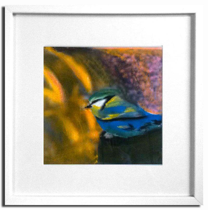 Mésange bleue Pastel sec 20x20cm Encadré sous-verre (Disponible)